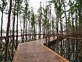 金山公园木栈道 - Wooden Boardwalk in Jinshan Park - 2015.06 - panoramio.jpg