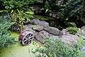 高峰植物園水生池 Eco pond in Gaofeng Botanical Garden - panoramio.jpg