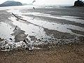 대부도갈매기 - panoramio.jpg