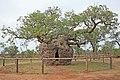 00 1996 Boab Prison Tree - Derby, Westaustralien.jpg