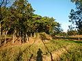 0604jfLandscapes Mabalas Diliman Salapungan San Rafael Bulacan Roadsfvf 08.JPG