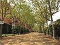 082 Passeig de la Boca de la Mina, vora el barri Gaudí.jpg