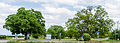 084 2015 05 26 Zwei Walnussbäume (Wiki Loves Earth 2015).jpg