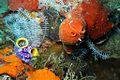 10-EastTimor-Dive Dirt-Track 12 (Coral)-APiazza.JPG