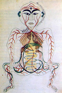 200px-17th_century_Persian_digestive_system