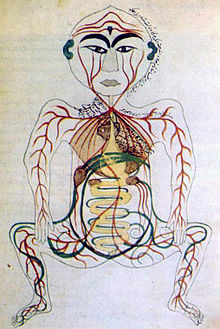 Human digestive system wikipedia historical depiction of the digestive system 17th century persia ccuart Choice Image