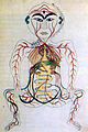 17th century Persian digestive system.jpg