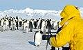 2007 Snow-Hill-Island Luyten-De-Hauwere-Emperor-Penguin-10.jpg