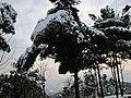 2010年12月15日夜里的那场雪 - panoramio (13).jpg