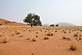 2010-09-26 09-38-23 Namibia Hardap Hammerstein.JPG