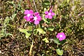 2010 07 15480 5498, Chintsun, Plants, Taiwan.JPG
