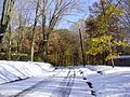 2011-10-30 09-View east along Woosamonsa Road in Hopewell Township, Mercer County, New Jersey after 6 to 7 inches of snow fell the previous day during the 2011 Halloween nor'easter.jpg