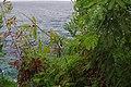 2012-10-22 14-18-35 Pentax JH (49278098086).jpg