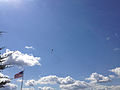 2014-08-24 15 05 29 Skydivers parachuting to the ground at Pennridge Airport in East Rockhill Township, Pennsylvania.JPG