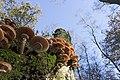 20141113 019 Well De Hamert Paddenstoel (15597168689).jpg
