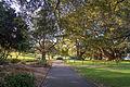 2015-09-13 Royal Botanic Gardens, Sydney - 4.jpg