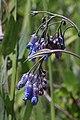 2015.06.27 13.38.19 IMG 2828 - Flickr - andrey zharkikh.jpg