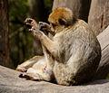 2016-04-21 13-57-35 montagne-des-singes.jpg