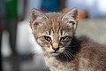 2016-06-25 Wikimania, Cat (freddy2001) (05).jpg