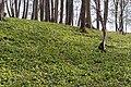 2019 Naturschutzgebiet Laubmischwald am Hetzleser Berg 01.jpg