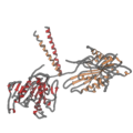 3kin kinesin ribbon.png