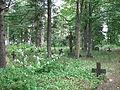 4075 - Noarootsi vana (Hosby) kalmistu (02).JPG