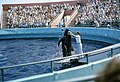 6208-MarineLandPilotWhaleShow-Bubbles-1.jpg