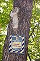 80-366-5003 Kyiv Nesterov Pine DSC 7998.jpg