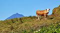Açores 2010-07-19 (5046776986).jpg