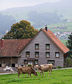 AR Halden Bauernhaus cows close-up2.jpg