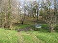 A Footpath Through The Wood - geograph.org.uk - 313918.jpg