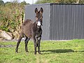 A curious donkey - geograph.org.uk - 1482216.jpg
