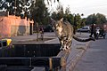 A feral cat in Marrakesh-2.jpg