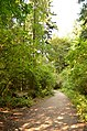 A forest path at the Seward Park - panoramio.jpg
