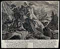 A group of chamois with their young in the mountains. Etchin Wellcome V0021006.jpg
