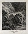 A lion resting and leaning against a rock. Etching by J. E. Wellcome V0021046EL.jpg