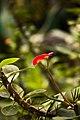 Absence Of Hummingbirds (64113411).jpeg