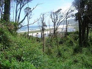 Вальдівійський ліс на заході острова