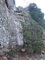 Accés al cim de la Morella (novembre 2011) - panoramio.jpg