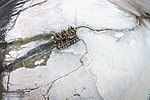 Aerial photographs of Lake Urmia 20150331 02.jpg