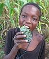 African Horned Cucumber (4663169534).jpg