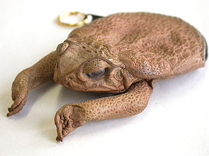 Cane toads in Australia - A purse made from a cane toad.