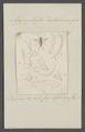 Agapophytus - Print - Iconographia Zoologica - Special Collections University of Amsterdam - UBAINV0274 038 08 0008.tif