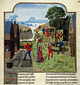 Agricultural labours - Livre des profits ruraux (late 15th C), f.305 - BL Add MS 19720.jpg