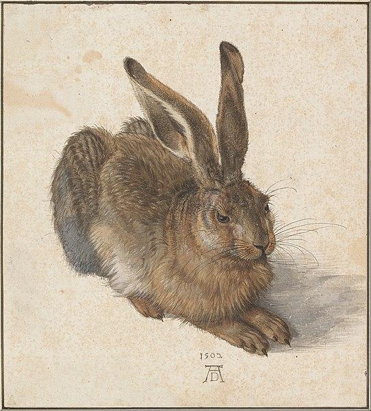 Albrecht Dürer, Young Hare, 1502