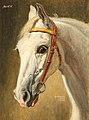 Alexander Pock Pferdeportrait Quinta 1926.jpg
