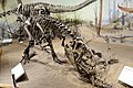 Allosaurus Royal Tyrrell.jpg