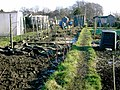 Allotments at Hough End - geograph.org.uk - 798187.jpg