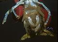 American lobster, Homarus americanus in Newfoundland, Canada (20996198598).jpg