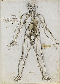 List of organs of the human body - Wikipedia